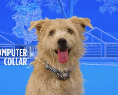 Dog with computer collar