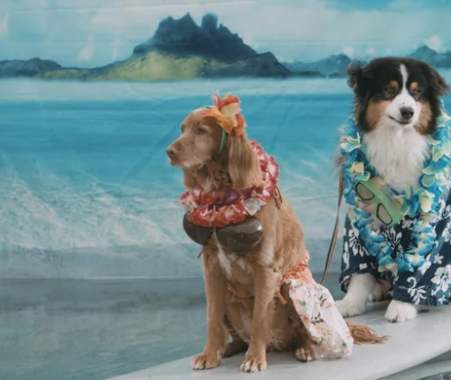 Two dogs on surfboard